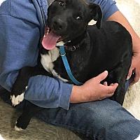 Adopt A Pet :: Jane - Broken Arrow, OK