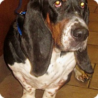Adopt A Pet :: Big Jake - Barrington, IL