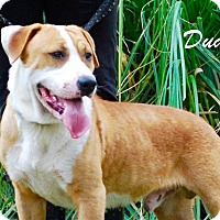 Adopt A Pet :: Dude - Daleville, AL