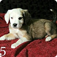 Adopt A Pet :: Yancey - Lufkin, TX