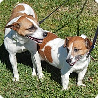 Adopt A Pet :: Pebbles and Bambam - Westport, CT