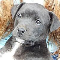 Adopt A Pet :: Petty (12 lb) - SUSSEX, NJ