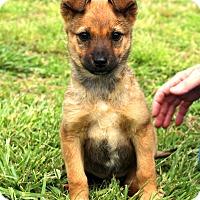 Adopt A Pet :: Mousey~ meet me! - Glastonbury, CT
