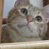 Adopt A Pet :: Kieran - Roseville, MN