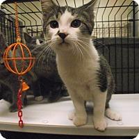 Adopt A Pet :: Count Chocula - Chambersburg, PA