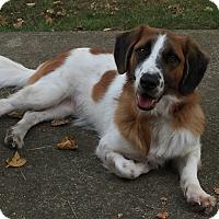 Adopt A Pet :: Carter - Staten Island, NY