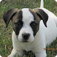 Adopt A Pet :: Kimmy - West Springfield, MA