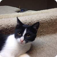 Adopt A Pet :: Gretel - Bridgeton, MO