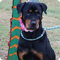 Adopt A Pet :: Echo - Pluckemin, NJ