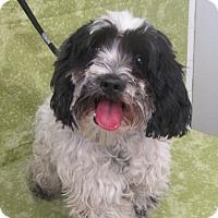Adopt A Pet :: Barnum - Los Angeles, CA