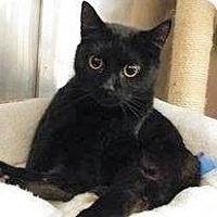 Adopt A Pet :: Ninja - Encinitas, CA