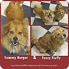 Adopt A Pet :: Yummy and Fancy