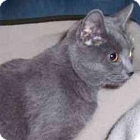 Adopt A Pet :: Sophia - Feeding Hills, MA
