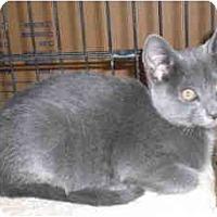 Adopt A Pet :: Moki - Davis, CA