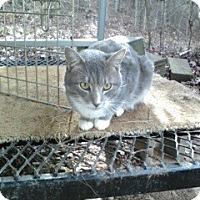 Adopt A Pet :: Smokey Bear - Monroe, GA