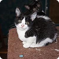 Adopt A Pet :: Vito - Tarboro, NC