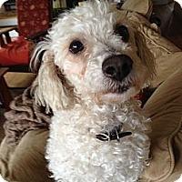 Adopt A Pet :: Romeo - San Francisco, CA