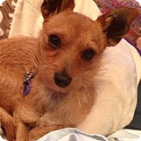 Adopt A Pet :: Abby Rose - Culver City, CA