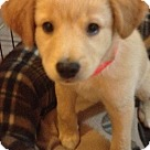 Adopt A Pet :: Halo