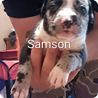 Adopt A Pet :: Samson - Surprise, AZ