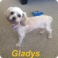 Adopt A Pet :: Gladys - Adopted August 2015 - Huntsville, ON