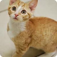 Adopt A Pet :: Hero - DFW Metroplex, TX