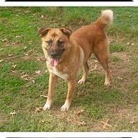 Adopt A Pet :: PETEY - CHICAGO, IL