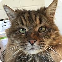 Adopt A Pet :: Miller - New Windsor, NY
