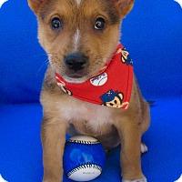 Adopt A Pet :: Dusty Bottoms - Irvine, CA