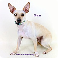 Adopt A Pet :: Simon - Bloomington, MN