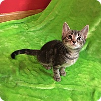 Adopt A Pet :: Tango - Columbus, OH