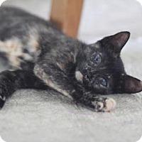 Adopt A Pet :: Malala - New York, NY