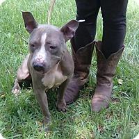 Adopt A Pet :: Kiera - Blountstown, FL