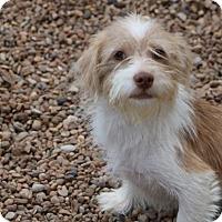 Adopt A Pet :: Philip - Meet him - Norwalk, CT