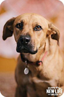 Rhodesian Ridgeback Mix Dog for adoption in Portland, Oregon - Georgia Isa Peach