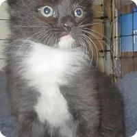 Adopt A Pet :: SLY - NYC, NY