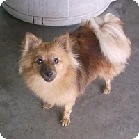 Adopt A Pet :: Maggie - Bonifay, FL