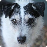 Adopt A Pet :: Skipper - Goleta, CA