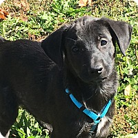 Adopt A Pet :: Tiara - Pennigton, NJ