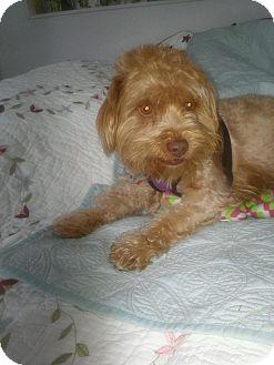 Terrier (Unknown Type, Small) Mix Dog for adoption in Gig Harbor, Washington - Loki