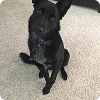 Adopt A Pet :: Leo - Phoenix, AZ