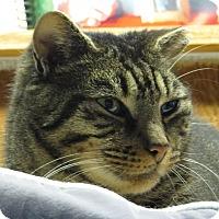 Adopt A Pet :: Elsa - Unionville, PA