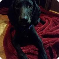 Adopt A Pet :: Pooch - Pendleton, NY