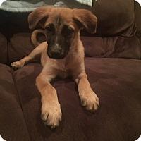 Adopt A Pet :: Doc - New Oxford, PA