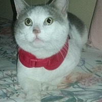 Adopt A Pet :: Gabriel - Oakland Park, FL