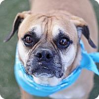 Adopt A Pet :: *MR.COOPER - Las Vegas, NV