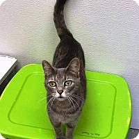 Adopt A Pet :: Remmy - Kalamazoo, MI
