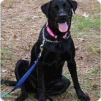 Adopt A Pet :: Marcie - Cumming, GA