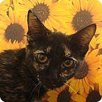 Adopt A Pet :: Paw-la - Albany, NY