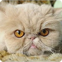 Adopt A Pet :: Coq au Vin aka